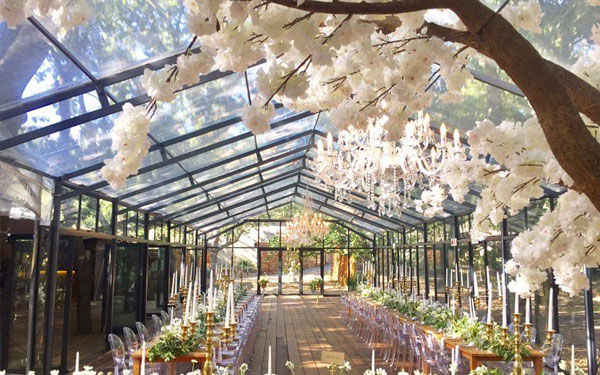 Cherry Blossom Tree for Hire in Cape Town