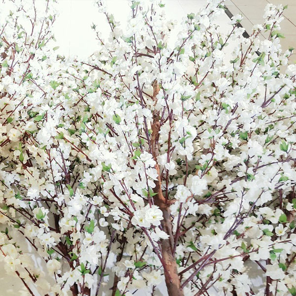 Muse Decor Hire Blossom Trees