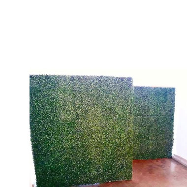 Green Plant Wall  - <p style='text-align: center;'>R 800</p>